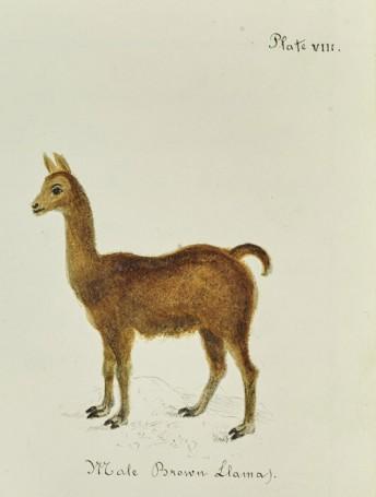 Natural History Workbook